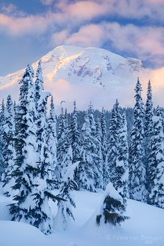 *🇺🇸 Winter in paradise (Mt Rainier National Park, Washington) by Floris van Bruegel ❄️ Beautiful World, Beautiful Places, Monte Everest, Places To Travel, Places To Go, Winter Szenen, Crystal Mountain, Evergreen State, Evergreen Trees