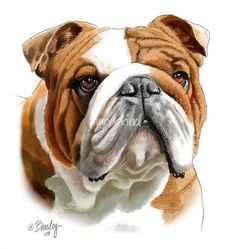 """""""Brown+and+White+Bulldog""""+by+Tim+Beasley,+Athens,+Georgia+//+This+guy+is+one+of+the+most+handsome+bulldogs+I've+ever+seen.+Not+realizing+how+solid+he+is,+he+loves+to+playfully+charge+you+driving+his+head+into+you+with+a+force+that+knocked+me+over+the+first+time+he+did+it.+My+painting+of+him+is+done+in+watercolor+and+pastel+pencils+//+Imagekind.com+--+Buy+stunning+fine+art+prints,+framed+prints+and+canvas+prints+directly+from+independent+working+artists+and+photographers."""