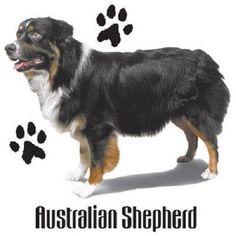 Australian Shepherd HEAT PRESS TRANSFER for T Shirt Tote Sweatshirt Fabric 803f #AB