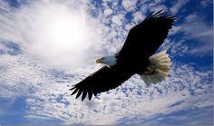 fly-like-an-eagle-and-soar_thumb.jpg (1119×663)