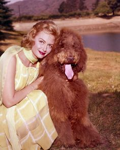 Famous Faces of Pancreatic Cancer Hollywood Music, Old Hollywood Stars, Hollywood Glamour, Classic Hollywood, Olivia Havilland, The Donna Reed Show, Karen Steele, Tv Moms, Gloria Dehaven