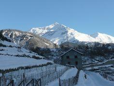 Vino del Ghiaccio,Ice Wine, Vin de Glace Casa Ronsil
