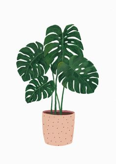 New Plants Painting Monstera 38 Ideas Plant Painting, Plant Drawing, Plant Art, Painting Art, Pattern Painting, Drawing Drawing, Watercolor Painting, Art And Illustration, Botanical Illustration