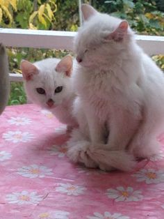 Anne kedi ve yavrusu