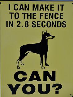 Beware of Dog (bite, legal, best, outside) -  - City-Data Forum