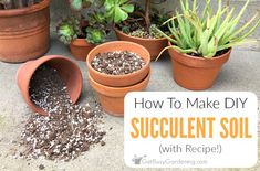 To Make Your Own Succulent Soil (With Recipe!) How To Make Your Own Succulent Soil (With Recipe!)How To Make Your Own Succulent Soil (With Recipe!