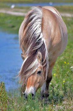 Sweet horses grazing by the pond. GEONAUTE: Eigerwand
