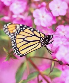 Create an inviting habitat for butterflies with careful plant selection and placement.  Midwest Living