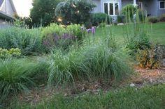 Ornamental Grasses for Minnesota Gardens