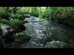 8 Hours Nature Sounds Waterfall River Relaxation Meditation Johnnie Lawson W:O Birdsong Slish Wood S – Exercises and Fitness Real Nature, Nature Music, Nature Gif, Calming Sounds, Nature Sounds, Relaxation Meditation, Meditation Music, Playlists, Dance Music