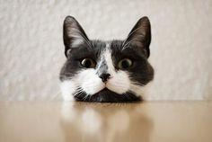 :3 kitty