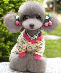 q hermosa la perrita y esa combinacion de ropa y los lazos en sus ,orejas mas el peinado la hacen ver bella :)