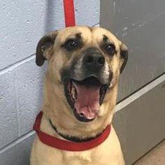 Chamblee, Georgia - Mixed Breed (Medium). Meet Jack, a for adoption. https://www.adoptapet.com/pet/20709657-chamblee-georgia-mixed-breed-medium-mix