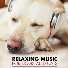 Relaxing Music for Dogs and Cats--help with pet anxiety may be found with classical music.  #music #cats #dogs #pets