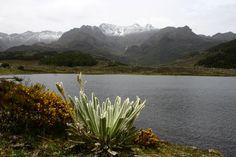 """La laguna de Mucubají se encuentra en unos de los páramos más conocidos del estado Mérida (Venezuela). A veces no es posible admirarla en su plenitud a causa de la  niebla. La laguna se alimenta por las corrientes de aguas cristalinas que descienden de las montañas.  En sus alrededores se pueden admirar las plantas conocidas con el nombre de """"frailejones""""."""