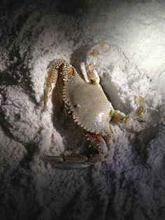 Crab hunt at Panama City Beach, FL