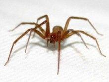 Tem medo de aranhas?