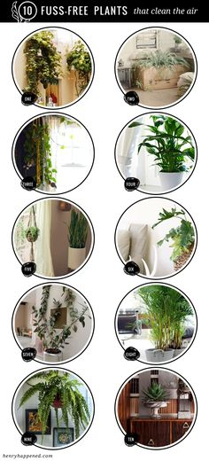 10 BEST : Fuss Free House Plants That Clean the Air