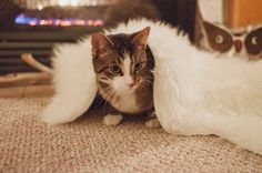 Not even this cat can deny the warmth of a sheepskin throw!
