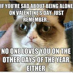 Valentine's Day - Grumpy Cat Reveals a Bitter-Sweet Reality. Thanks Grumpy Cat Grumpy Cat Quotes, Funny Grumpy Cat Memes, Funny Cats, Funny Jokes, Grumpy Kitty, Cat Jokes, Grumpy Car, Funny Cat Quotes, Grumpy Cat Disney