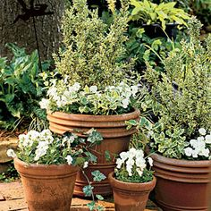 82 Creative Container Gardens | Variegated Boxwood & Violas | SouthernLiving.com