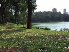 São Paulo - Parque da Aclimação - Pesquisa Google