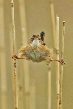 Hilarious ;) oiseau faisant le grand-écart.