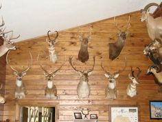 Trophy Rooms, Room Pictures, Aldo, Game Room, Track Lighting, Hunting, Ceiling Lights, Home Decor, Decoration Home