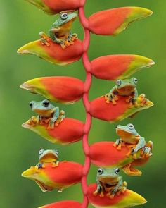 Wildlife Photography, Nature Photography, Congratulations Photos, Historical Monuments, The Kingdom Of God, How Beautiful, More Photos, Animal Kingdom, Location History