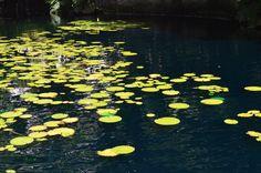 Los contrastes de color tan fuertes y la atmósfera que ello genera son muy pictóricos y ricos visualmente, pues invitan al espectador a recorrer ese camino de verdes vibrantes y de pequeños reflejos en el agua.