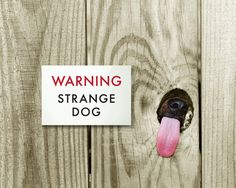 This totally applies to my dog > Funny Dog Sign Fail. Engrish Humor. Strange Dog. $15.00, via Etsy.