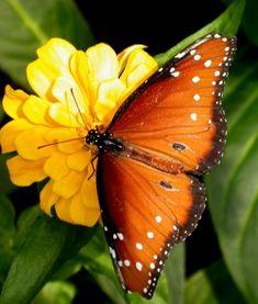 Yellow Butterfly | grandeza da vida é valorizar as coisas mais simples da vida