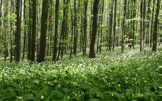 Park prirode Papuk - Parkovi Hrvatske