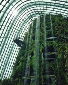 Tag who you'd explore with! Singapore Cloud Forest 🍃🌿🌲🌳 By our awesome friend🌟 @habashi 🌟 .