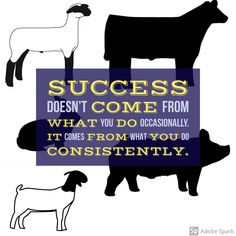 It's true - success comes from what you do consistently, not just every once in a while! Cow Quotes, Farm Quotes, Life Quotes, Shirt Quotes, Country Quotes, Livestock Judging, Showing Livestock, Show Cattle Barn, Stall Decorations