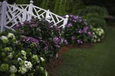 The First hydrangeas that bloom all season long | Endless Summer® Collection