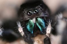A new study finds spiders have surprisingly good hearing.