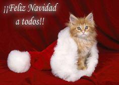 christmas cat - Merry Christmas Cat