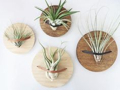 Creative DIY Wooden Wall Planter Ideas To Inspiring Your Home Decor : Creative DIY Wooden Wall Planter Ideas To Inspiring Your Home Decor Wall Plant Hanger, Macrame Plant Hangers, Plant Wall, Plant Decor, Diy Wooden Wall, Wooden Walls, Wall Wood, Deco Cactus, Air Plant Display
