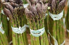 Fun food fact of the week: Why asparagus makes urine smell funny - The Daily Californian Creamy Asparagus, Asparagus Soup, Grilled Asparagus, Asparagus Recipe, Urine Smells, Stone Soup, Veggie Side Dishes, Food Facts, Spring Recipes