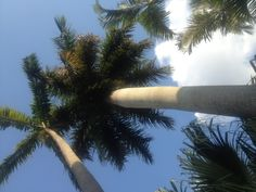 Resting under palm trees in a hammock is how I have started my summer! #ChooseSkinHealth