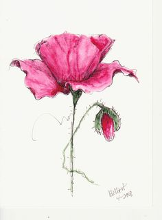 """Original artwork of a single lovely red poppy flower with a poppy bud bending to the side rendered in pen, ink and watercolor. The poppy watercolor is painted with a vivid mayan red that makes the flower seem so luscious and elegant. It is titled """"Red Poppy With Green Stem"""" and is"""