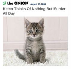 """The 25 Funniest """"The Onion"""" Headlines Of All Time!"""