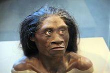 """Homo floresiensis (""""Flores Man"""", nicknamed """"hobbit"""" and """"Flo"""") is a possible species, now extinct, in the genus Homo. The remains of an individual were discovered in 2003 on the island of Flores in Indonesia. Partial skeletons of nine individuals have been recovered, including one complete cranium (skull).[1][2] These remains have been the subject of intense research to determine whether they represent a species distinct from modern humans, and the progres"""