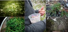 ForageSF....sign up for a class to learn some edible plants in SF or the EastBay #dateidea  $42.00 per person