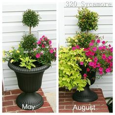 Summer 2012 Flower Pots —-May planting and how they have grown August, … - All For Herbs And Plants Outdoor Pots, Outdoor Gardens, Flower Pots Outdoor, Flowers, Porch Flowers, Garden Design, Garden, Plants, Planting Flowers