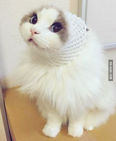 I just died because of the cuteness of this cat.
