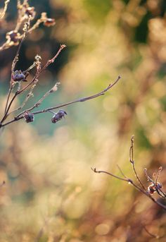 Photos taken by me. Lovely winter nature. Sunny day photography. Plants and pastel colors. Check out more at my blog; MarteRavn.com