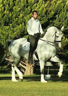 Jaco, Genealogy, Horses, Animals, Animais, Animales, Animaux, Family Tree Chart, Animal