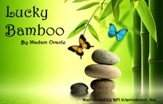 """""""Lucky Bamboo"""" by Madam Oracle 